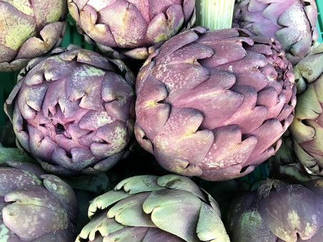 Artichaut violet bio