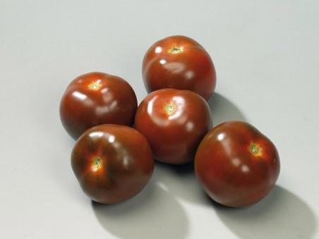 Tomates noires de crimée bio