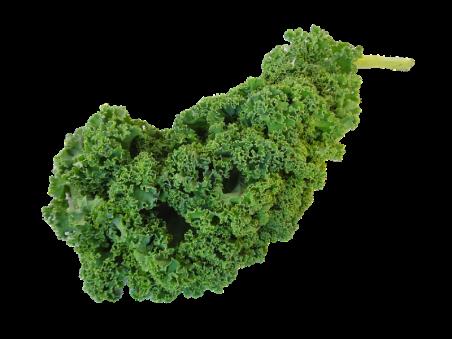Choux kale bio