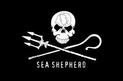 Association sea shepherd, protection des oceans
